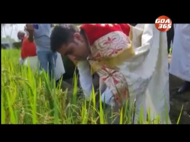 Taleigao Konsachem Fest celebrated