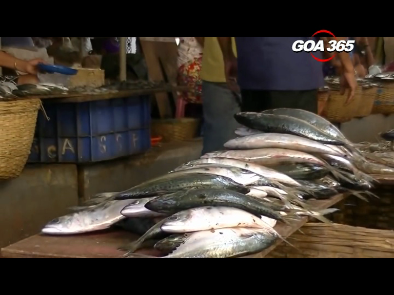 Small to Big, all fish comes from outside! Traders claim it's safe, Opp demands to ban it