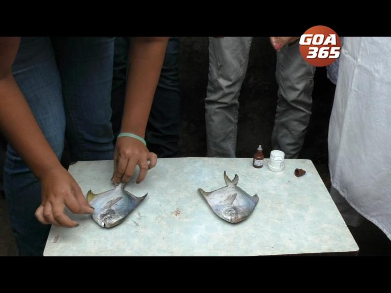 Cong finds Formalin in Madgao fish, Vishwajeet denies, blasts Congmen