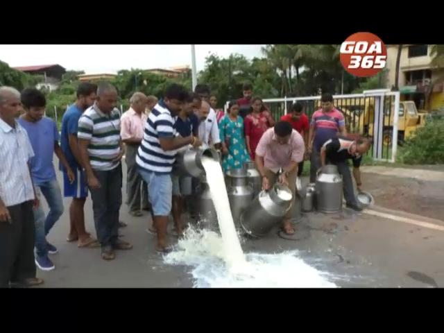River of milk flows on Porvorim road as SUMUL rejects farmers' milk