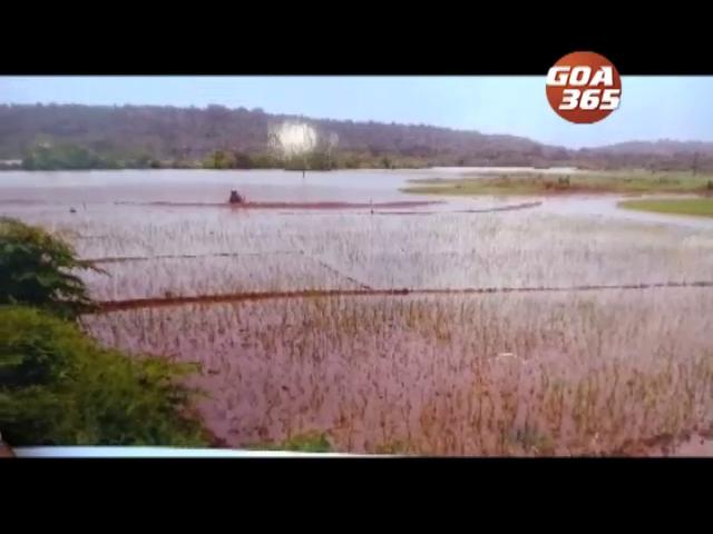 Sancoale MLA and farmers refutes Agustin Moniz's allegations