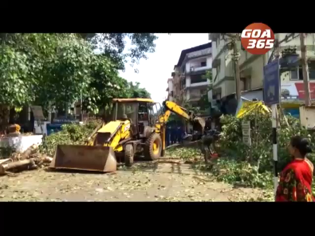 Tree branch collapses, 2 shops damaged