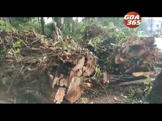 Tree falls, 1 Man died at Rachol
