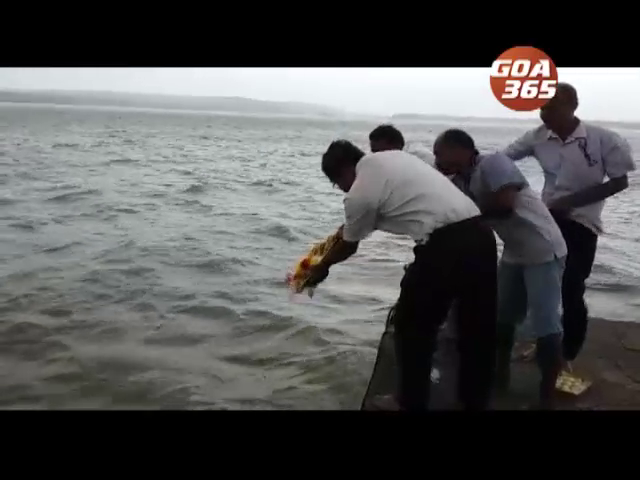 Xapora fishermen conducts coconut pooja to start  fishing season