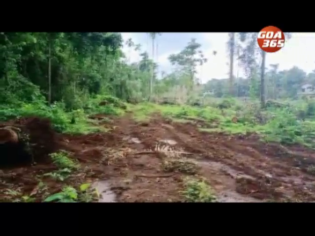 animal-man conflict is on the rise is this cutting down of trees in various places in the state :  Activist Amrut Singh