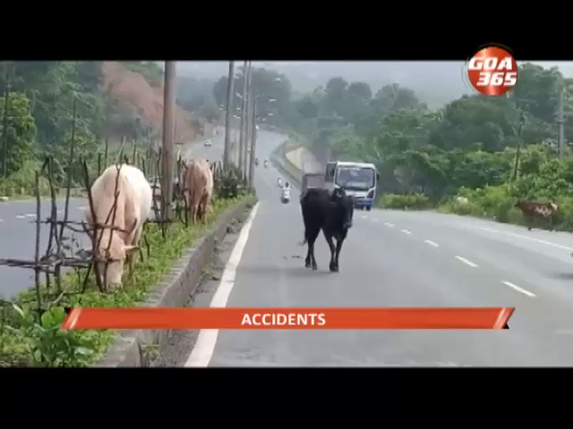 2 injured after hitting a cow