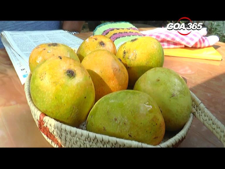 Festival of Mankurad Mangoes!