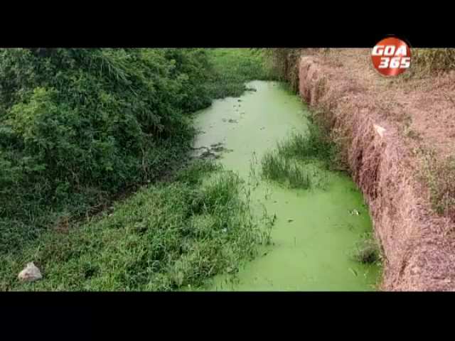 Navelim farmers upset over release sewage water into nullah, their fields