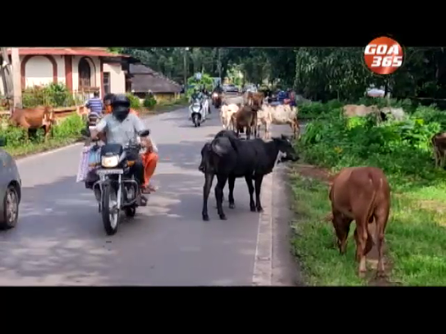 Solve the stray cattle issue