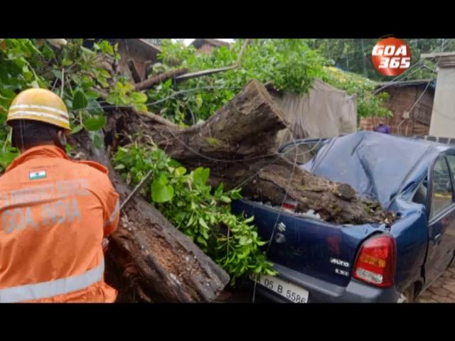 Huge tree comes crashing down on House, traps man underneath at Ponda