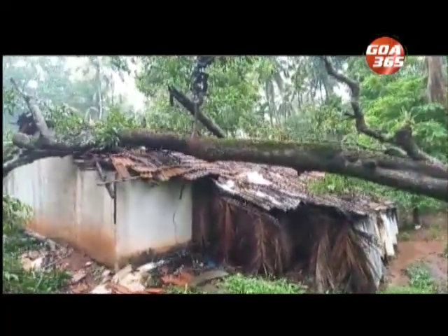 Tree fall in Ponda damages 2 houses