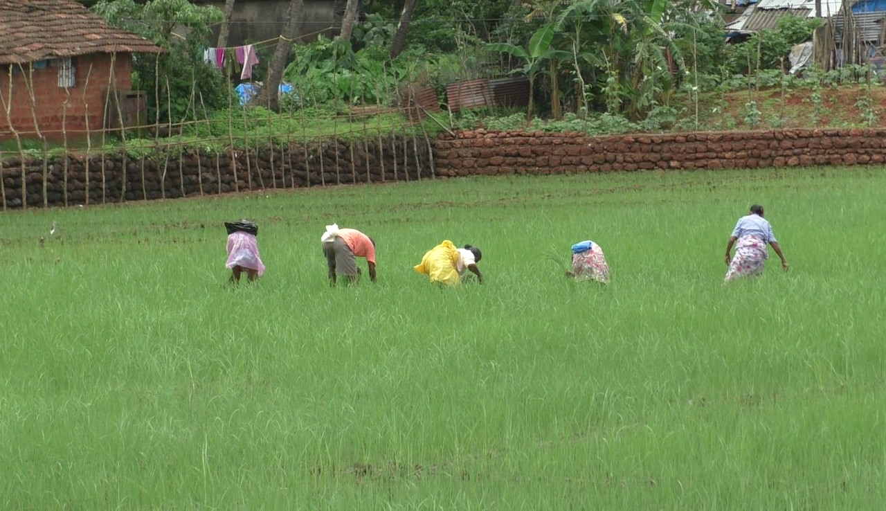 60 percent of the land in Ponda is acquired for agriculture