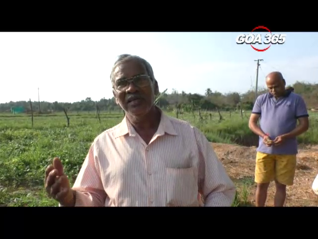 Agriculture an alternative to mining? Here's a story of 40 farmers