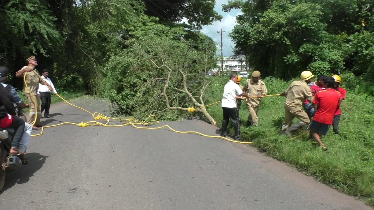 Branch of tree obstructing traffic at Sonsoddo cut