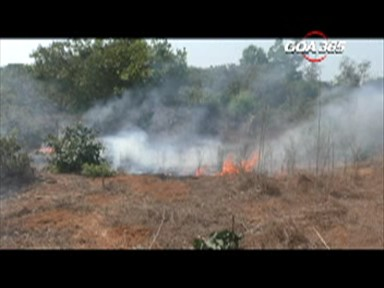 Cashew plantation in Balli gutted in fire