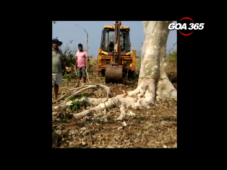 Deforestation in the name of development? Activists protest