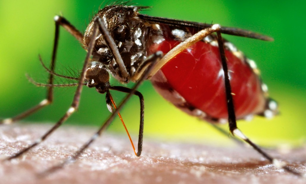 Dengue cases on rise, officials initiate stringent measures to curb virus