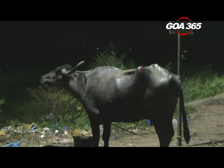 Fire personnel rescue two cows