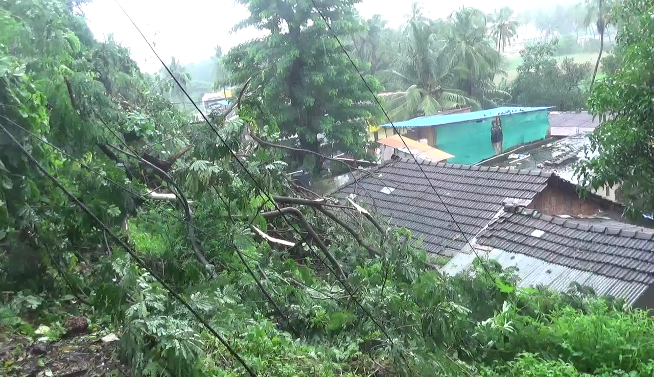 Tree falll in Vasco damages house in Vasco, people demand to cut old trees