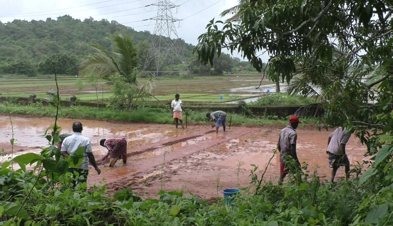 Khajan lands back under cultivation, farmers claim heavy profits