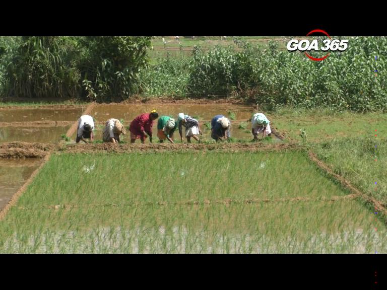 Paddy farming a costly affair, farmers want Govt help
