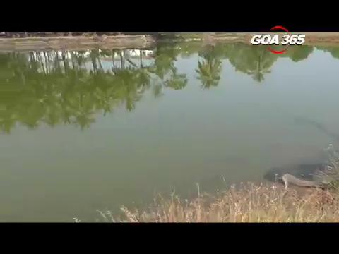 Pednekars object to salt pan filling at Agarwaddo