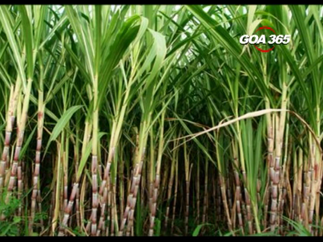 Sugarcane farmers withdraw their assembly morcha