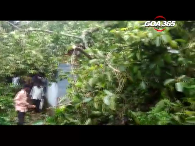 Tree collapses in Revora, 11 year old dies on the spot