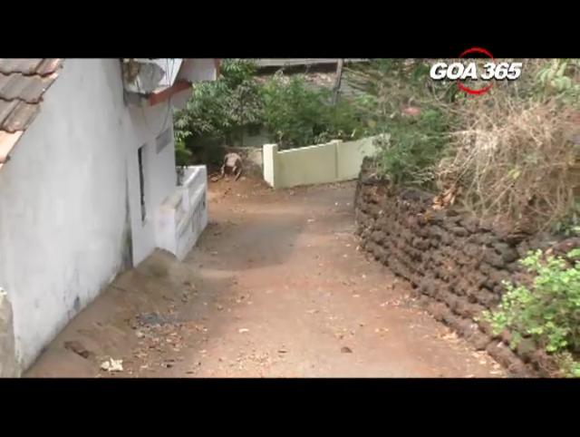 Vazri: 60's village in 21st century Goa